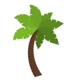 Palm tree nature plant design vector image vector image