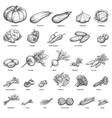 Sketch doodle hand-drawn set vegetables vector image