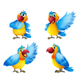 Four colorful parrots Vector Image