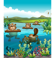 Four beavers playing in the river vector image vector image