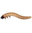 Earthworm vector image vector image