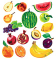 fruit color on white background vector image