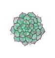 succulents Flower graptopetalum vector image