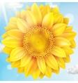 Sunflower with blue sky - autumn EPS 10 vector image
