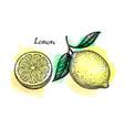 lemon sketch set vector image