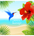 tropical background with hummingbird vector image