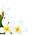 frangipani vector image