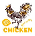 eco farm chicken vector image