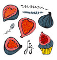 Colorful set of hand drawn figs vector image