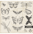 Set Calligraphic Hand drawn Butterflies vector image