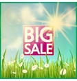 Grass with flowers and Sale vector image