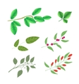 Set of green brunches with leaves and berries vector image