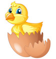 little chick comes of of egg vector image