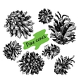 Collection of drawn pine cones vector image vector image