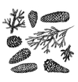 Collection of drawn fir cones vector image vector image