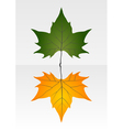 Green and dry leaf vector image vector image