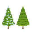 merry christmas tree sign on white background vector image
