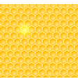 brightcomb vector image