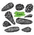 Collection of drawn fir cones vector image