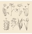 Wildflowers herbs and flowers Spring or summer vector image