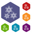 star anise icons set hexagon vector image