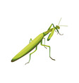 Mantis symbol of fighting style vector image