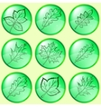 leaves buttons set vector image