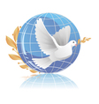 dove of peace near globe vector image