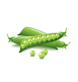 Peas isolated on white vector image
