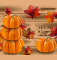 pumpkin realistic on wood vector image