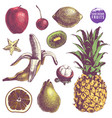 set of hand drawn juicy fruits vector image