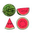 Whole half quarter and slice of ripe watermelon vector image
