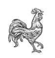 Rooster Vintage black engraving vector image
