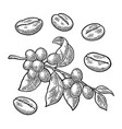 coffee branch with leaf berry and beans vintage vector image