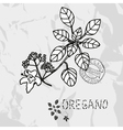 Hand drawn oregano vector image