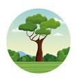 tree branch bushes forest landscape design vector image