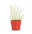 Delicate green indoor leafy plant in pot vector image