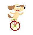 cute little dog puppy character riding bicycle vector image