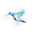 Watercolor colibri bird vector image