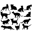 Silhouettes of cats vector image