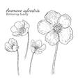 Anemone sylvestris flowerrs sketches set vector image