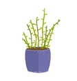 Green indoor leafy plant with stems in blue pot vector image