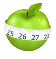 apple with measurement vector image