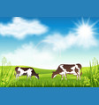cows grazing in a summer meadow vector image