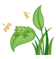 green frog vector image