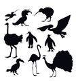 Exotic Birds Silhouettes vector image