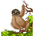 Cute sloth on branch vector image