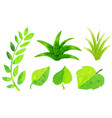 different types of green leaves in watercolor vector image