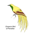 Tropical bird hand draw on a white background vector image